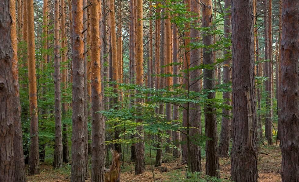 Bosque en el parque natural de Moncayo, entre Zaragoza y Soria.