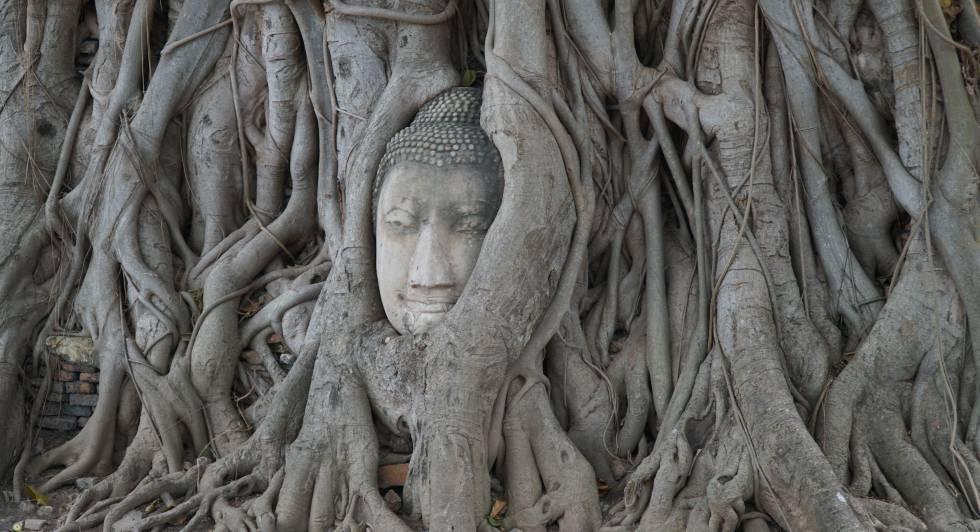 Cabeza de buda en Ayutthaya (Tailandia).