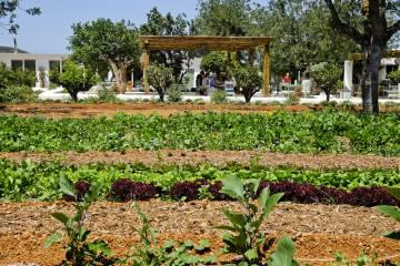 Huerta del restaurante Aubergine, en la isla de Ibiza.
