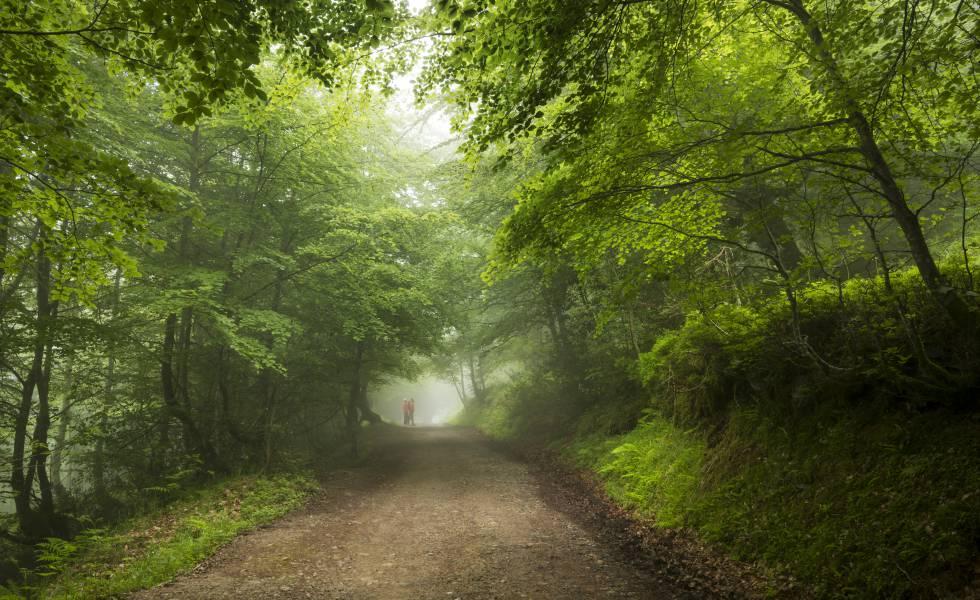 Un bosque en la región de Ponga (Asturias).
