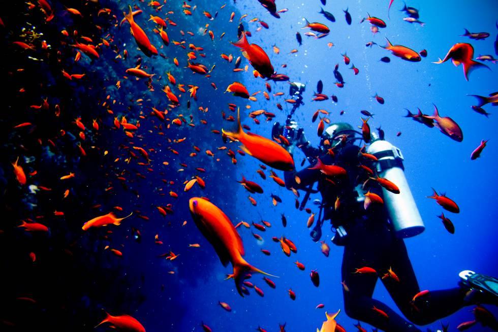 Los 10 destinos de buceo favoritos de Paco Nadal en el mundo