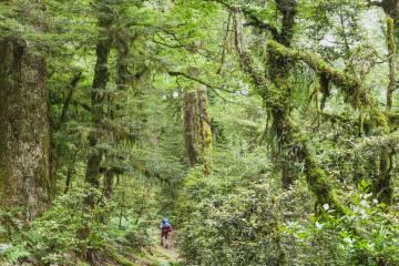 Un senderista en el parque nacional Te Urewera, en la Isla Norte de Nueva Zelanda.