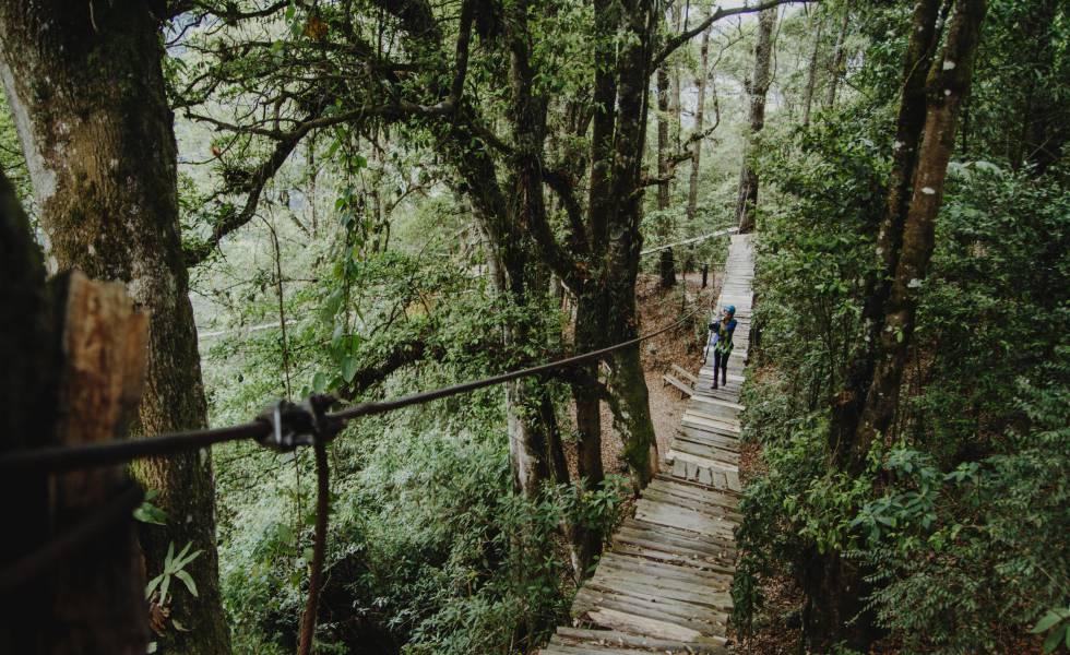Uno de los puentes suspendidos del parque ecológico Pino Dulce, en Guatemala.