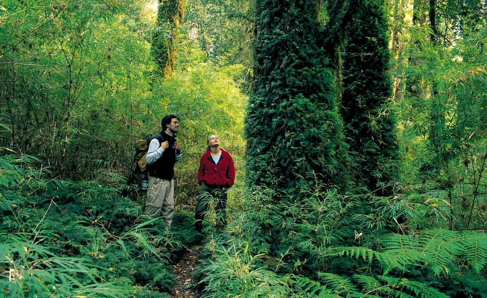 El sendero de Alerce, en el parque nacional Pumalín, en Chile.