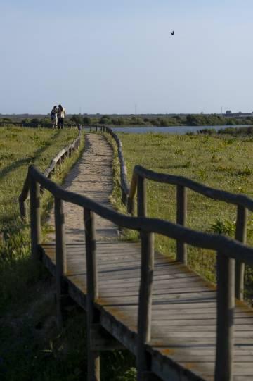 Una de las pasarelas en la laguna de la Dehesa de Abajo (Sevilla).