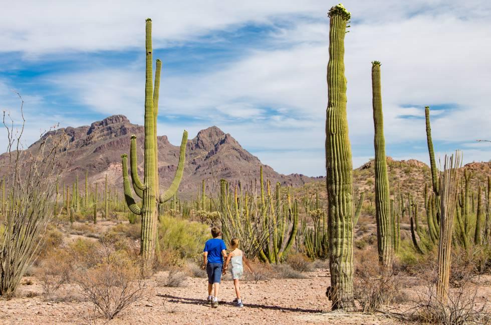 Cactus y tacos en el desierto de Sonora