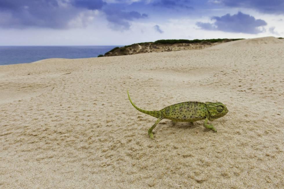 Las 25 playas más bonitas de España, según los lectores de EL PAÍS