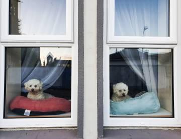 Dos perritos en una casa de la localidad de Letterkenny.