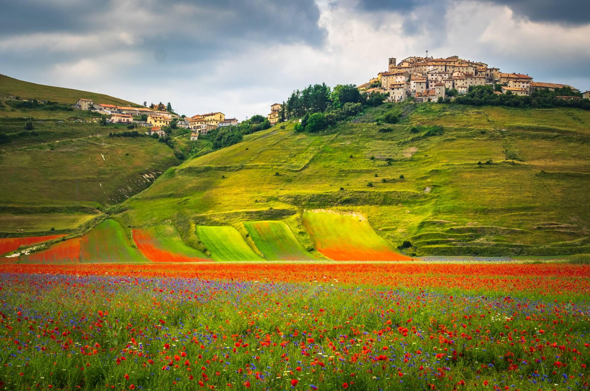 De meados de Maio a princípios de Julho, a planície de Castellucio di Norcia, nas montanhas Sibillini, está coberta de milhões de papoilas, lírios, anémonas e margaridas, um espectáculo natural conhecido como La Fiorita.