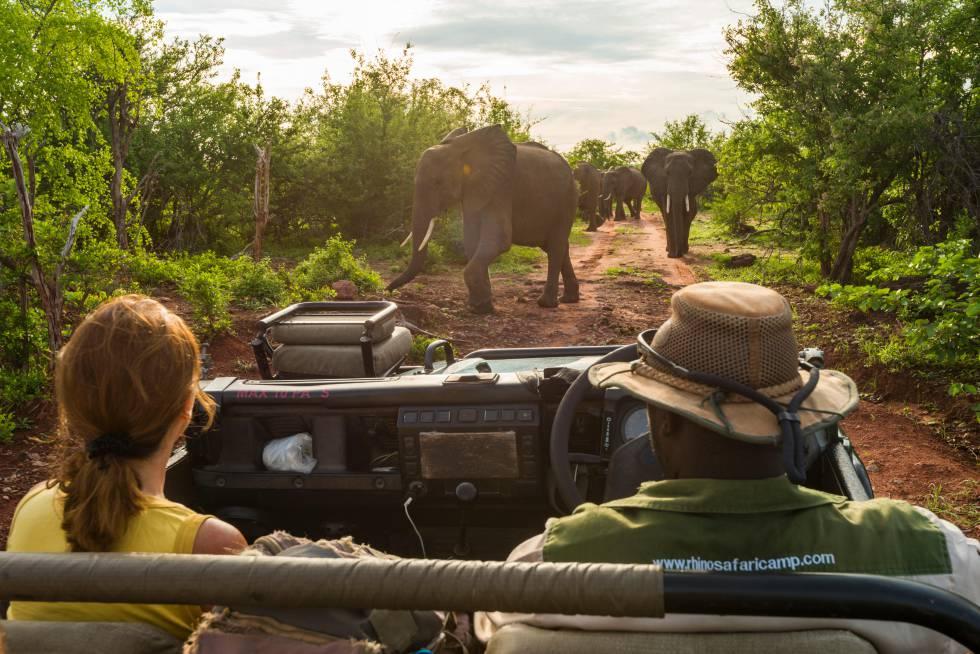Una pareja de turistas observa a unos elefantes en el Parque Nacional de Matusadona, en Zimbabue.