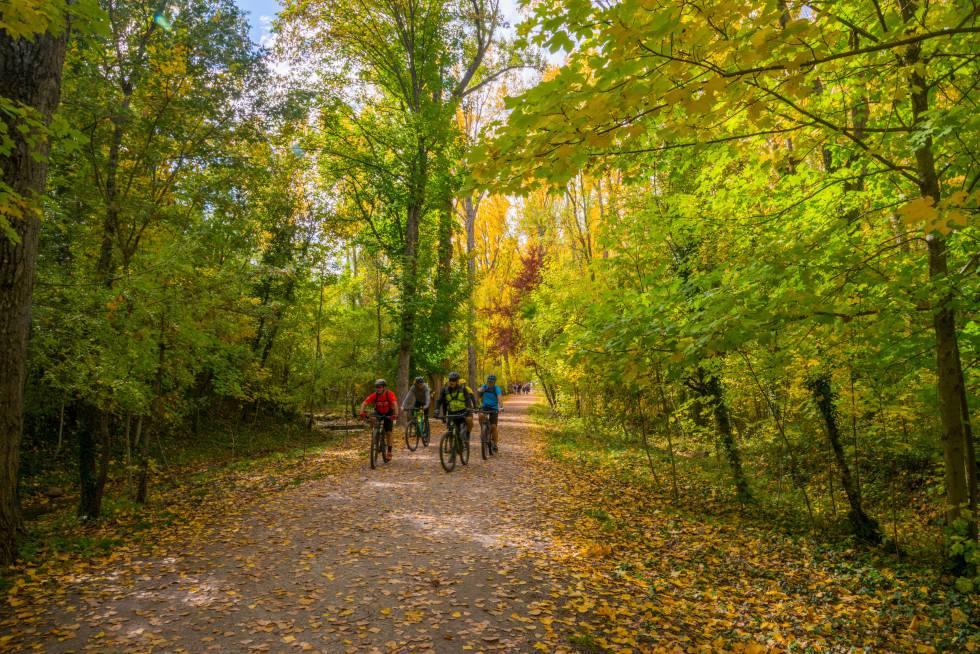 Un grupo de ciclistas en una pista forestal en la localidad serrana de Rascafría (Madrid).
