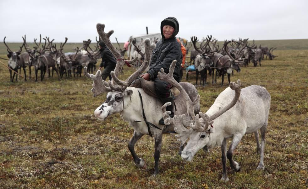 Pastores dolganos de renos en la tundra de la región de Krasnoyarsk (Rusia).