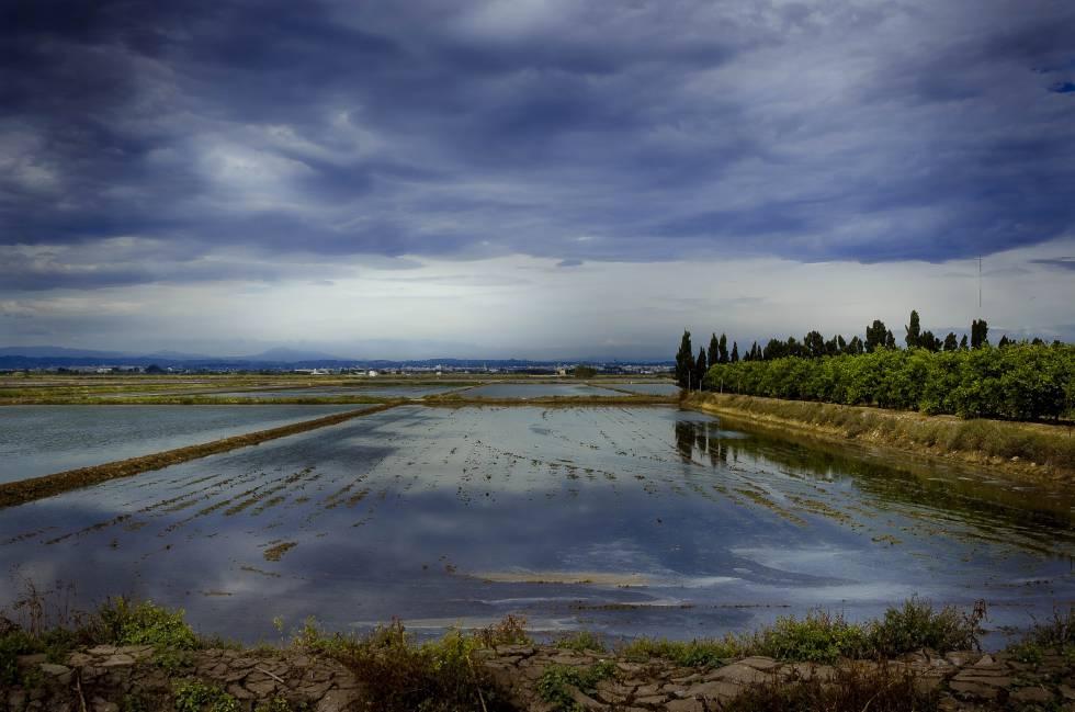 Campos de arroz en la Albufera de Valencia.