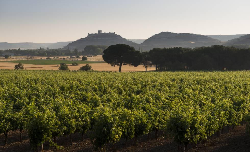 Una ruta celestial por tierra de vinos