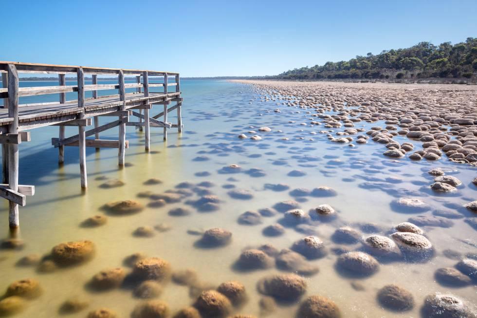 Estromatolitos en la costa oeste de Australia.