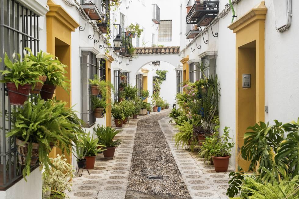 Una calle de la judería cordobesa, decorada con macetas y plantas, colgadas de las rejas y en el suelo.