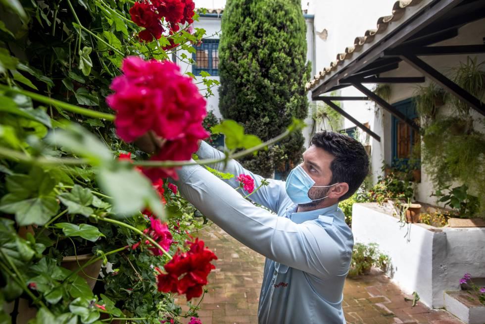 El jardinero del Palacio de Viana trabaja en el Patio de los Gatos, del siglo XIV, el más antiguo de Córdoba.