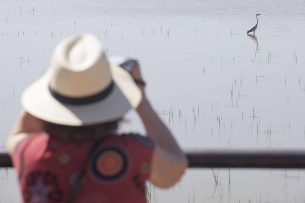 Una mujer observa una garza real en el parque nacional de Doñana.
