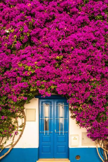 Fachada cubierta de buganvillas en el pueblecito de Burgau, en el Algarve.