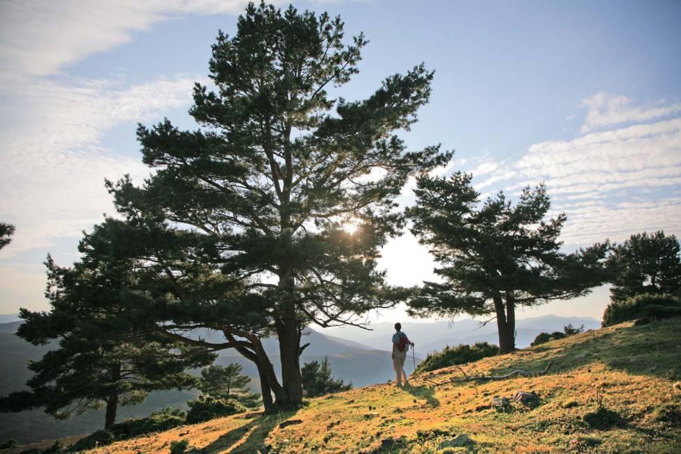 La sierra de Cebollera es el único espacio riojano con distinción de parque natural.