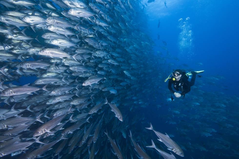 Submarisnismo en las profundidades del Pacífico, bajo las aguas de la isla del Coco, en Costa Rica.