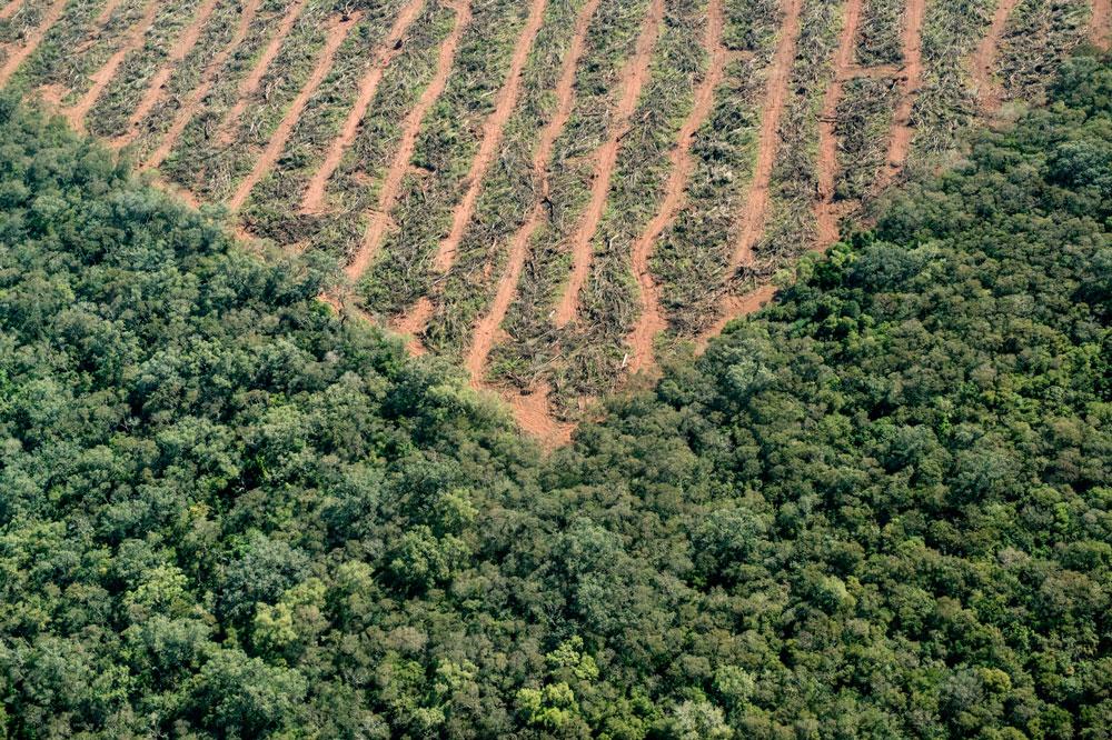 El accionar de las topadoras deja un crudo contraste entre la vida y la muerte de los bosques.