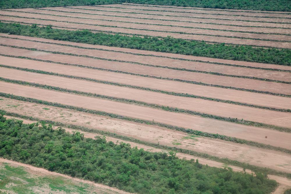 Una de las estancias arrasadas de árboles y preparada para el cultivo de soja.