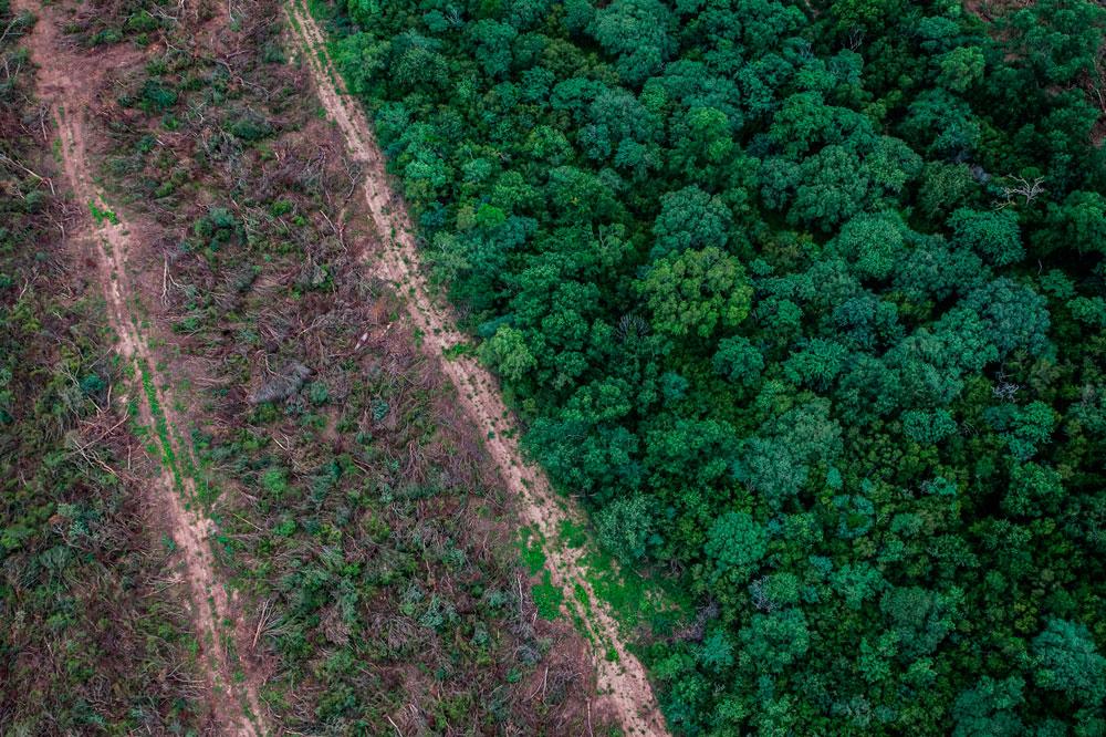 Una imagen aérea muestra el antes y el después del desmonte.