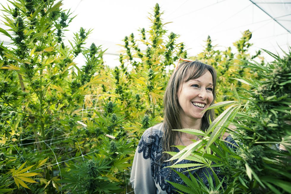 Medicinal marijuana harvest time begins at latin america for Plantation cannabis exterieur