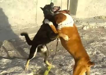 VIDEO: una vecina filmó cómo mataban a un perro