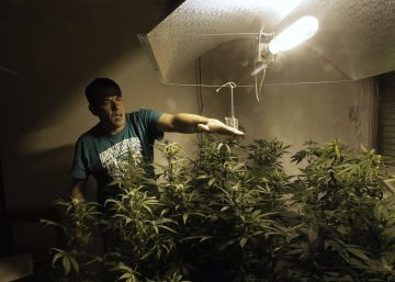 Will Uruguayans ever get the chance to buy legal marijuana?