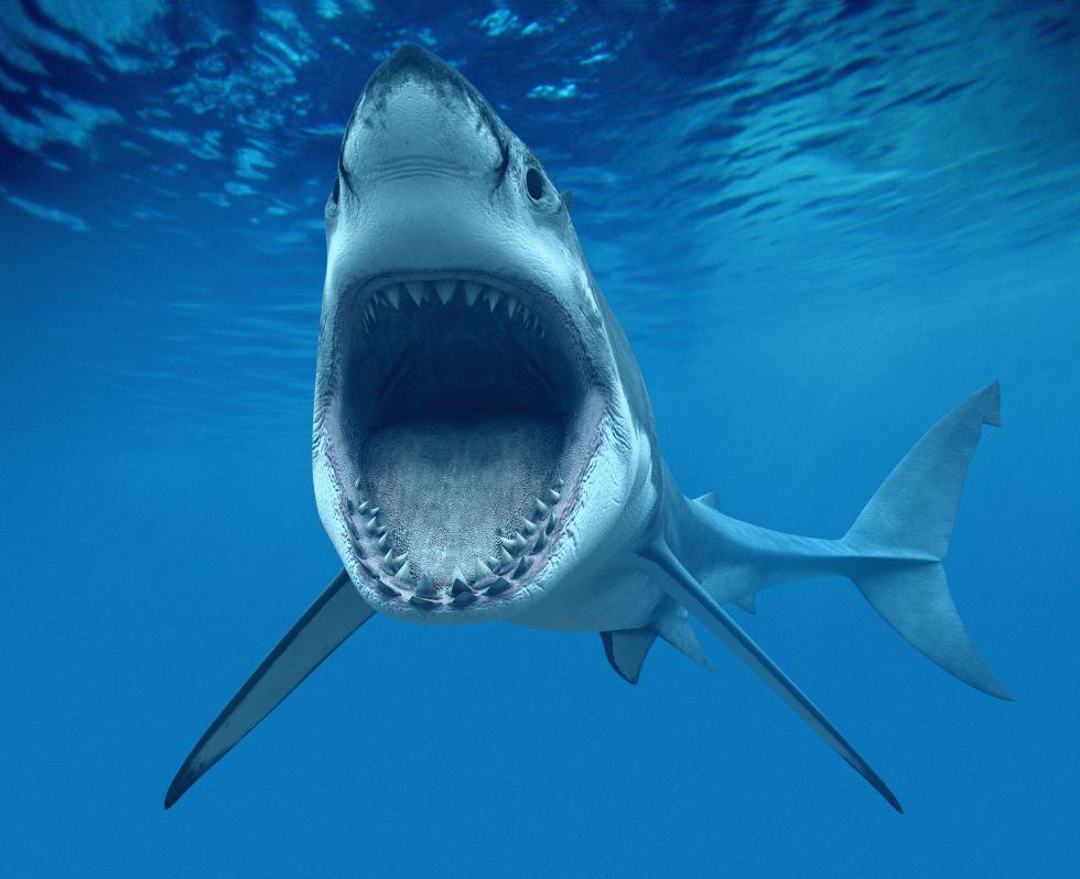 Resultado de imagen de tiburón
