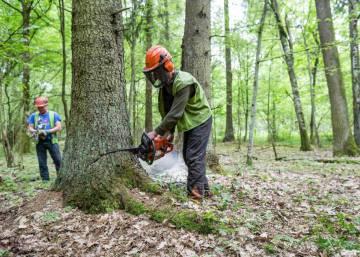 Bialowieza, el último bosque virgen de Europa