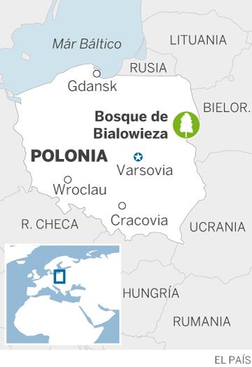 Polonia desoye a la UE de nuevo y sigue talando un bosque patrimonio de la Unesco