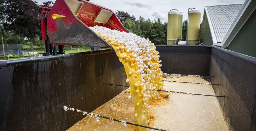 Una máquina desecharlos huevos contaminados en una granja avícola de Onstwedde (Holanda).