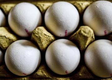 Holanda desaconseja el consumo de huevos por el uso de un pesticida