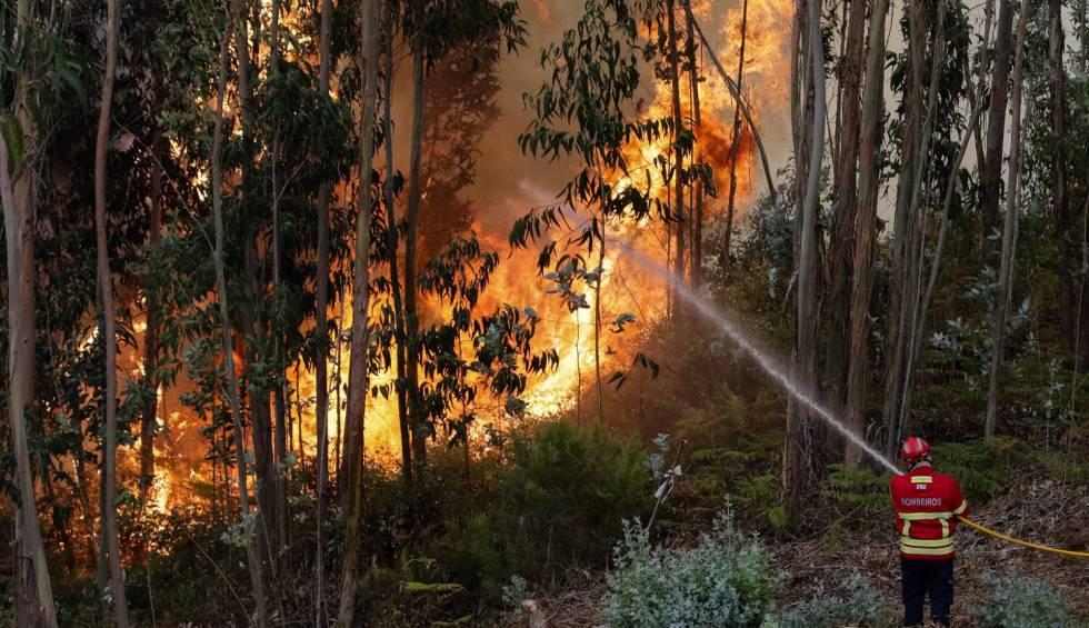 Un bombero combate las llamas en Cabouco, Coimbra, este domingo.