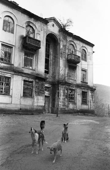 Perros callejeros ante un edificio abandonado.
