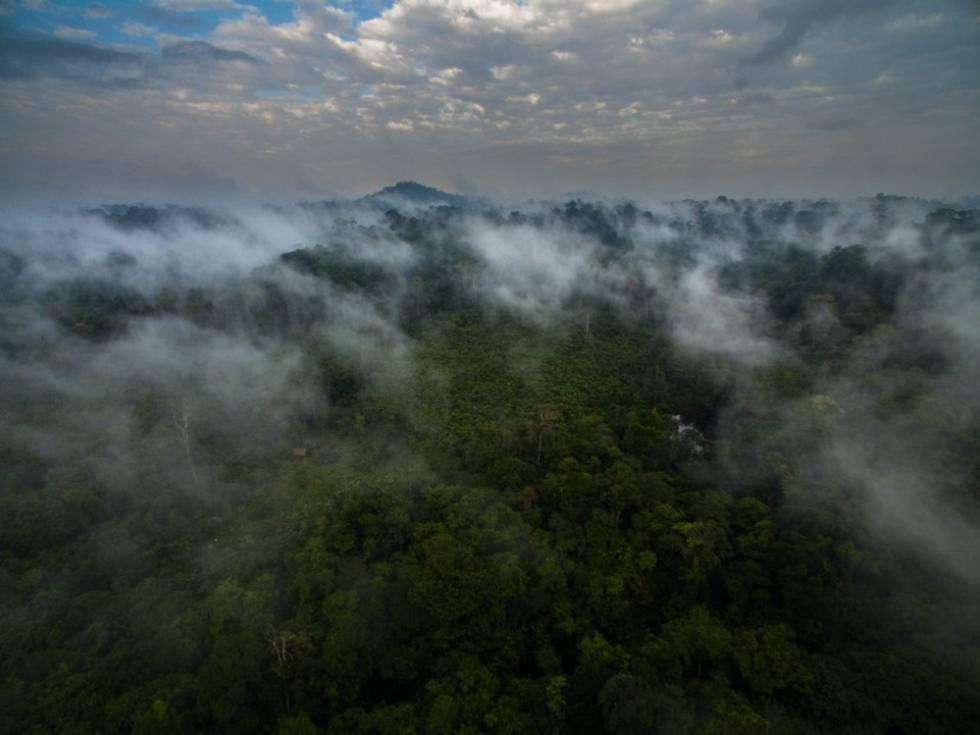 Vista de las tierras de los indios Wajãpi en la selva amazónica.