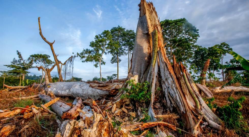 Varios árboles destrozados en un bosque tropical de Costa de Marfil.