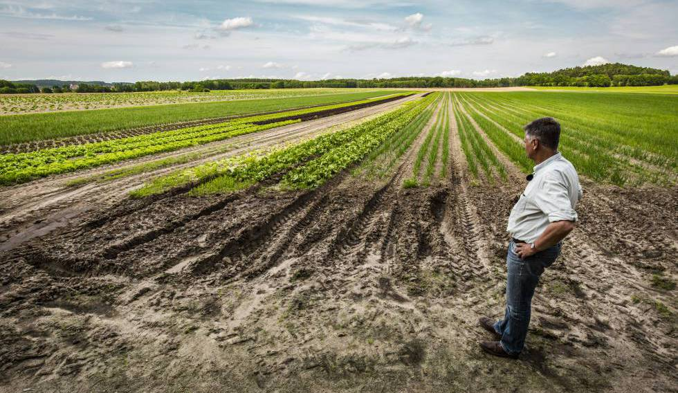 El granjero Ludolf Van Maztlan observa sus cultivos ecológicos en el Estado de Brandeburgo (Alemania).