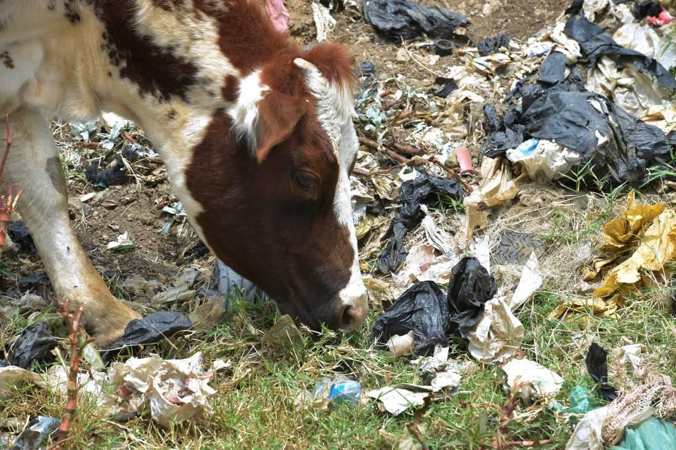 Resultado de imagen para prohiben bolsas plásticas en kenia