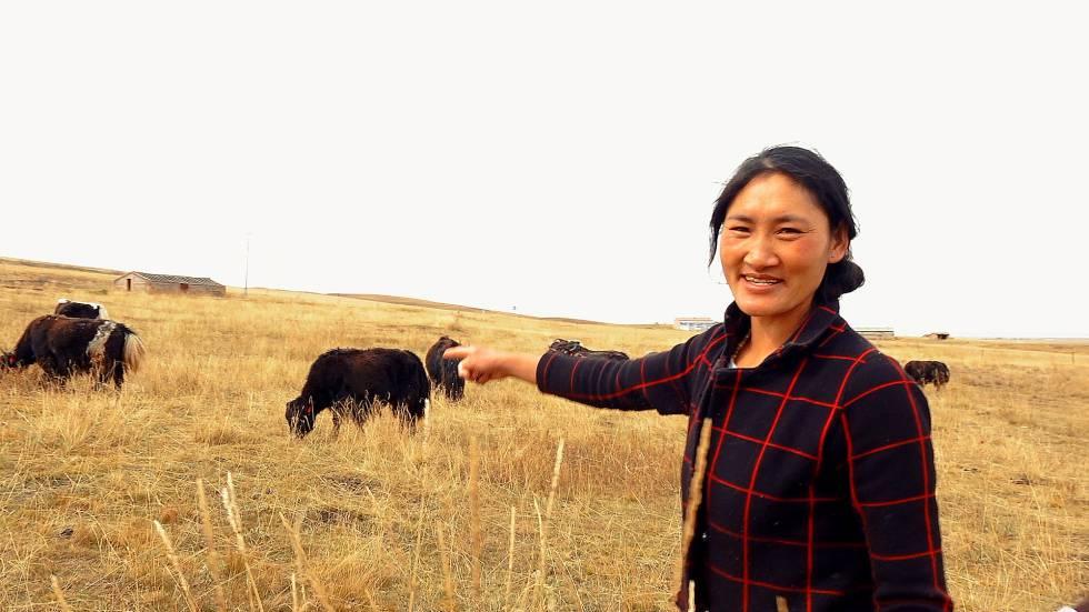 La nómada tibetana Tsewang Zanmo señala su rebaño de Yak