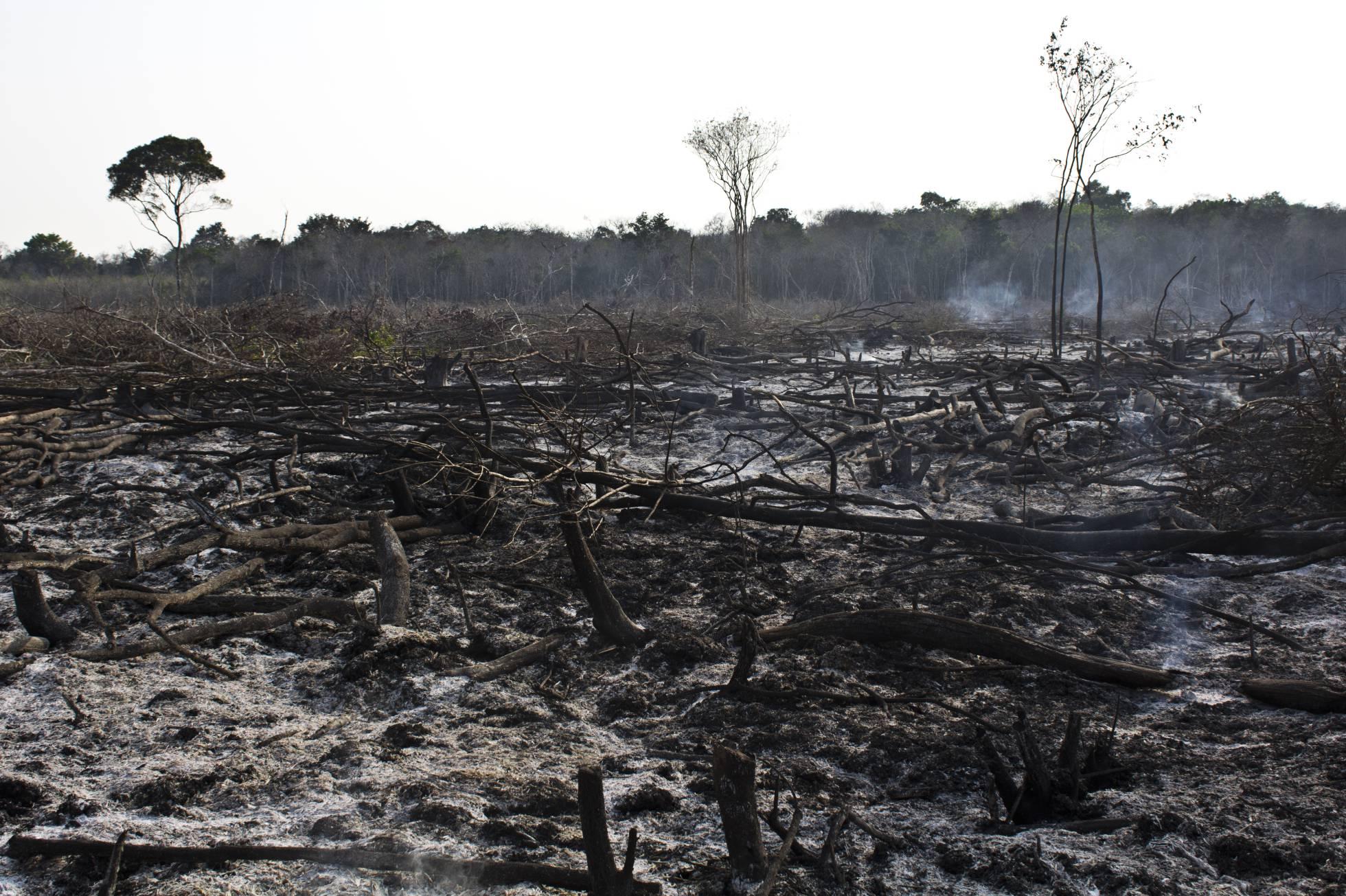 Una zona boscosa deforestada de Yucatán. Eugenio Fernández