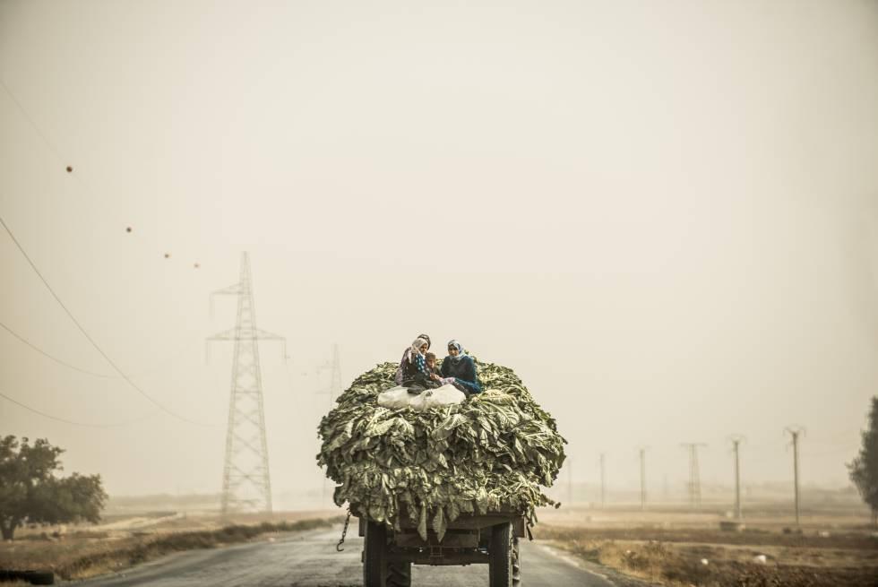Agricultoras sirias trasportan acelgas en la carretera que une Alepo con Damasco