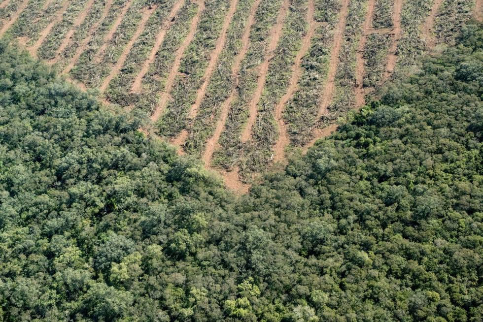 La tala acaba con especies que superan los 40 años de vida.