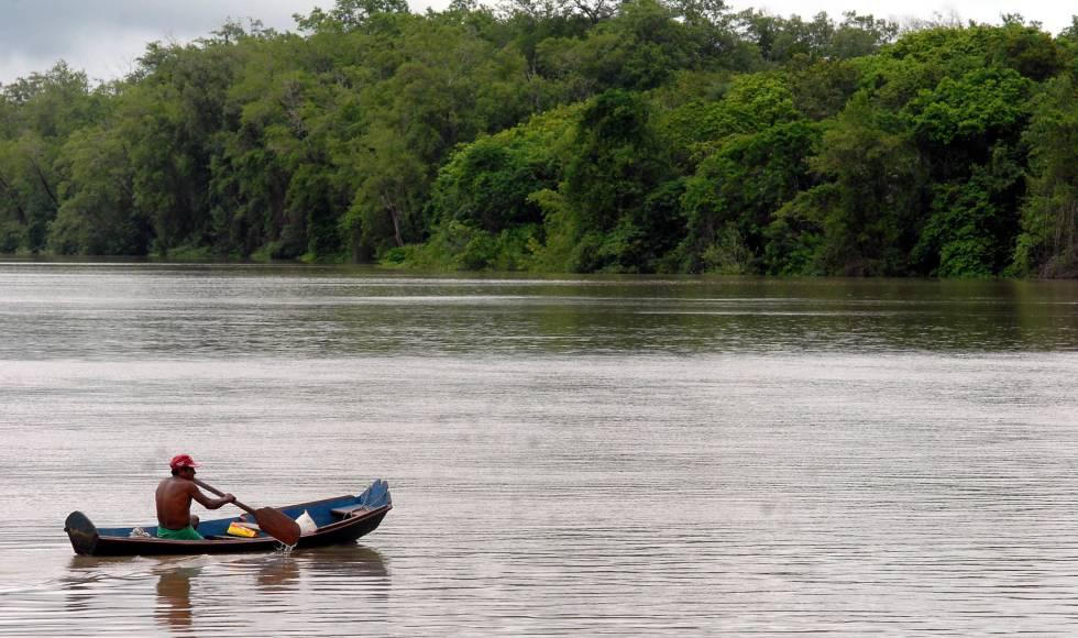 Preservar a Amazônia gera empregos e paz para a América Latina