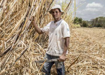 Dentro de la destrucción secreta de la gran sabana de Brasil