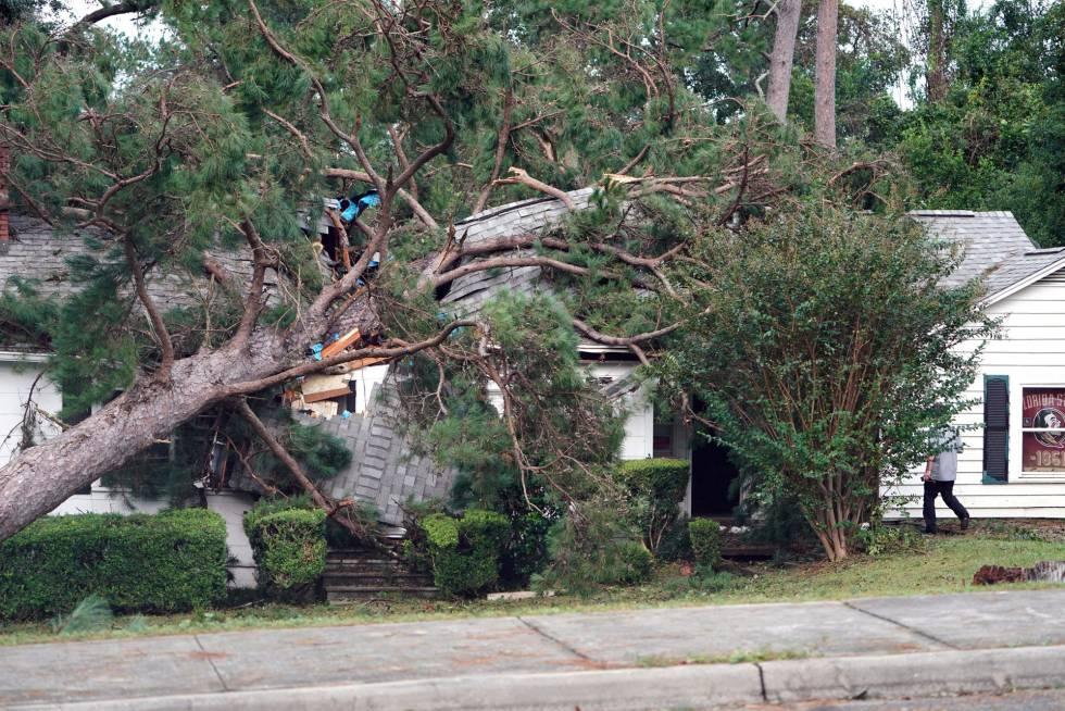 Un árbol caído en Tallahassee tras el paso del huracán