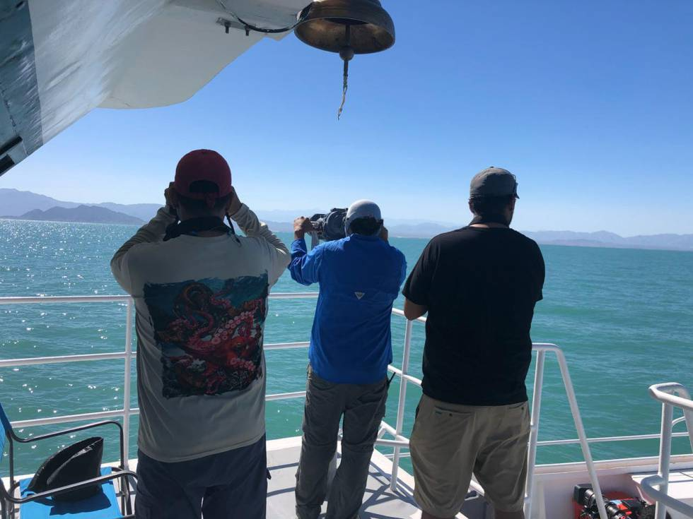 Científicos del Museo de la Ballena y Ciencias del Mar durante un crucero para avistar vaquitas marinas.
